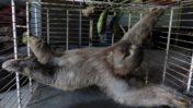 Bicho-preguiça é resgatado em estrada de Itaquaquecetuba